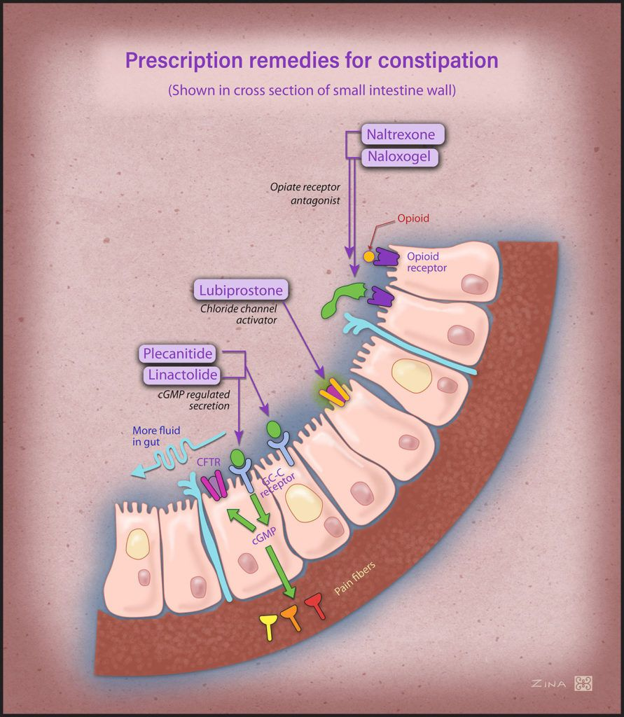 Mechanism of action of new prescription medicine for the treatment of constipation.